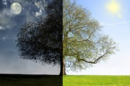 day and night with tree